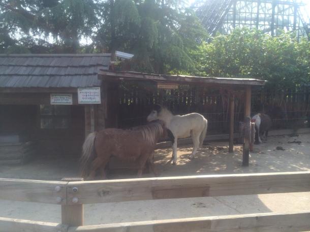 8 ponies