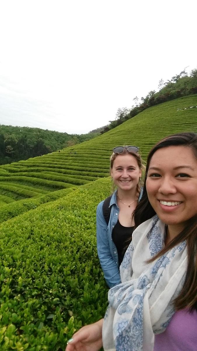 Korea in Three days (Part 1): Boseong Green Tea Festival